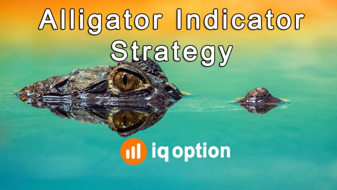 How to trade using the Alligator indicator for instantly making $536 in IQ Option